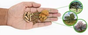 la biomasa energia